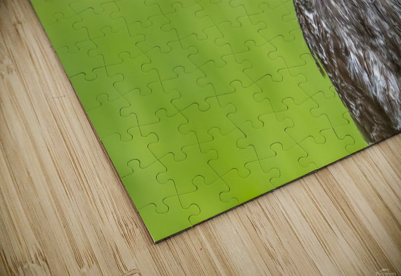 Great Grey Owl - Grey on Green HD Sublimation Metal print