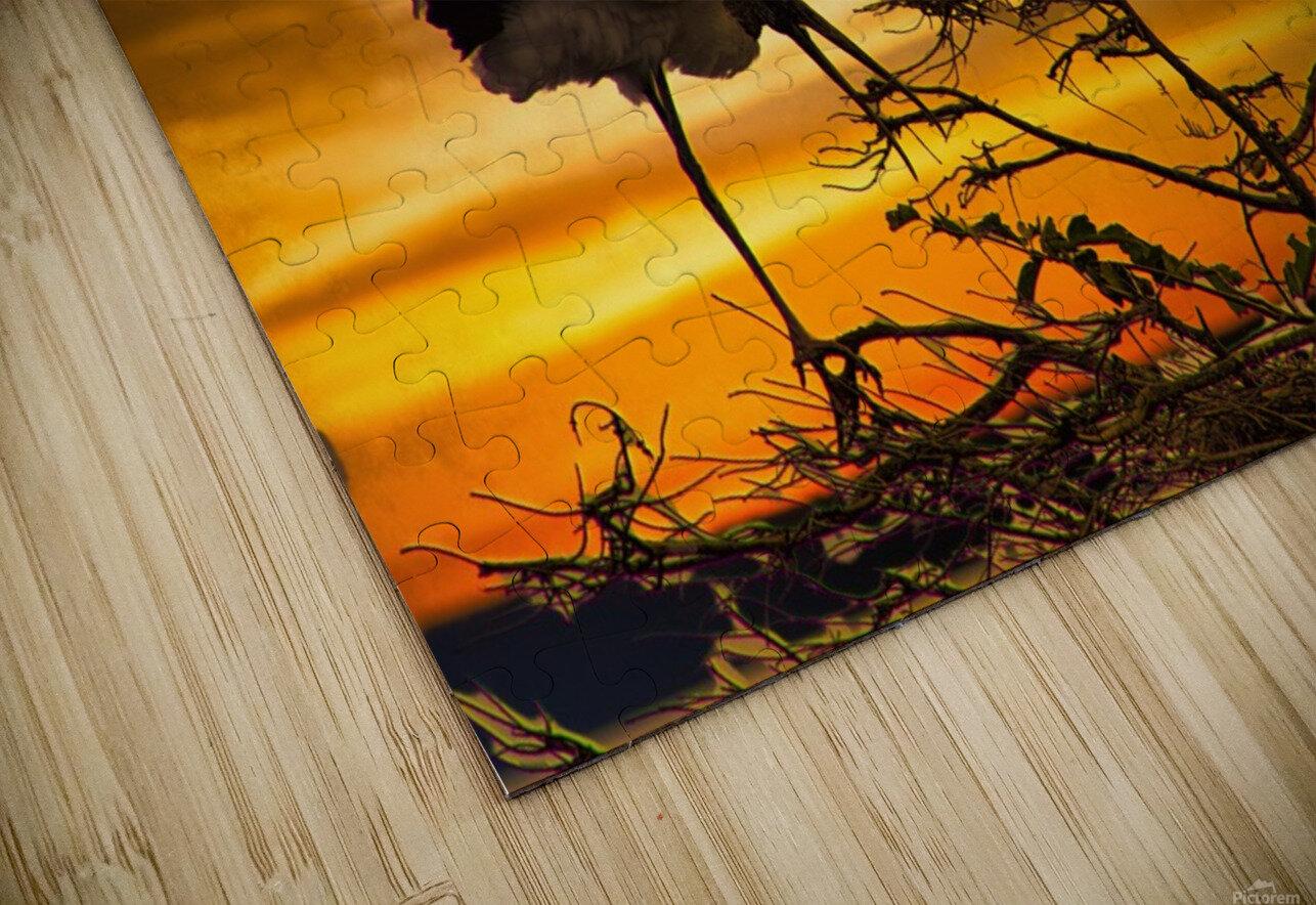 Wood Storks at Sunset HD Sublimation Metal print