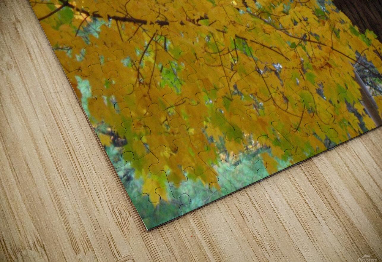 Fall Foliage Photograph HD Sublimation Metal print