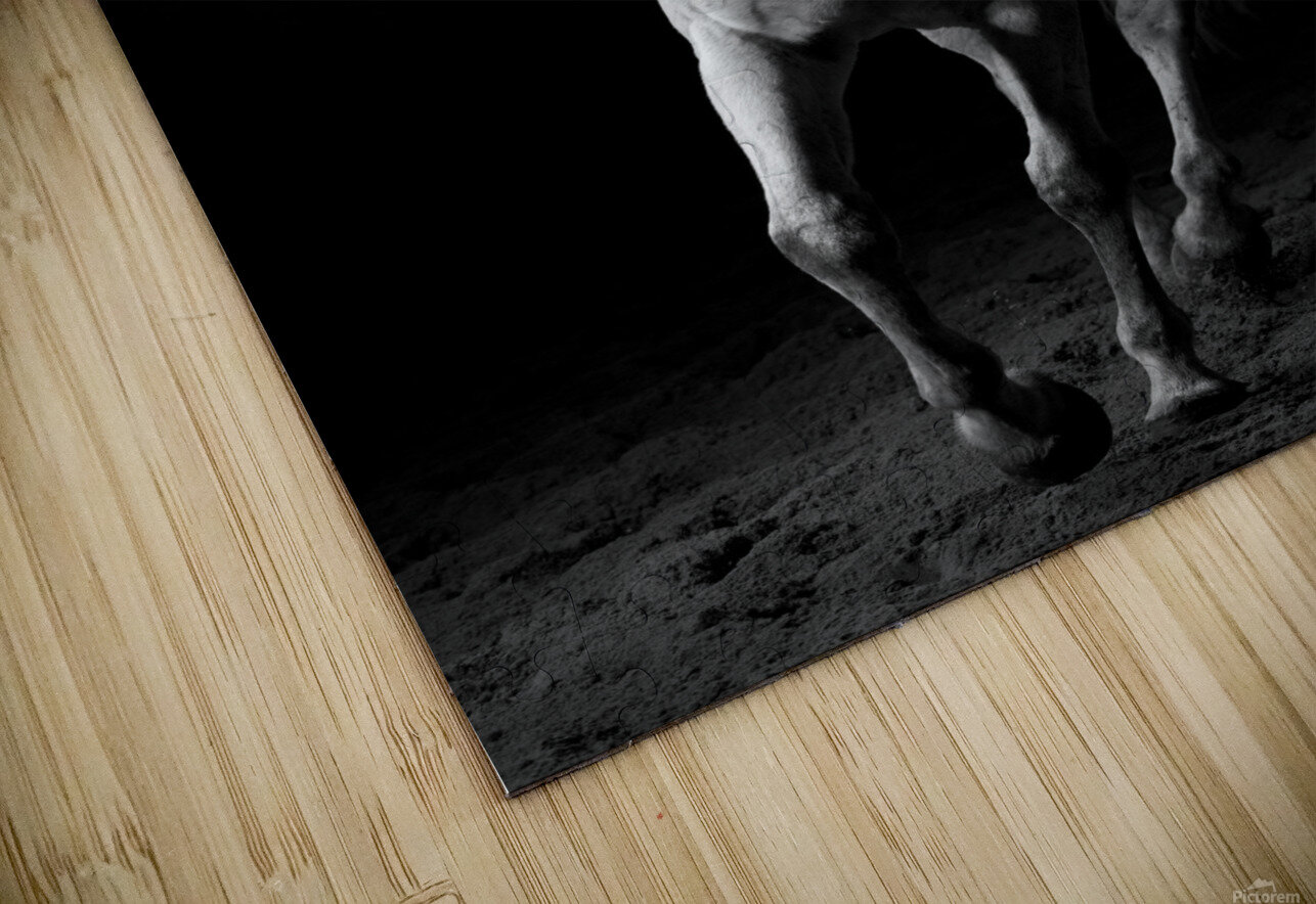 Studio Horses HD Sublimation Metal print