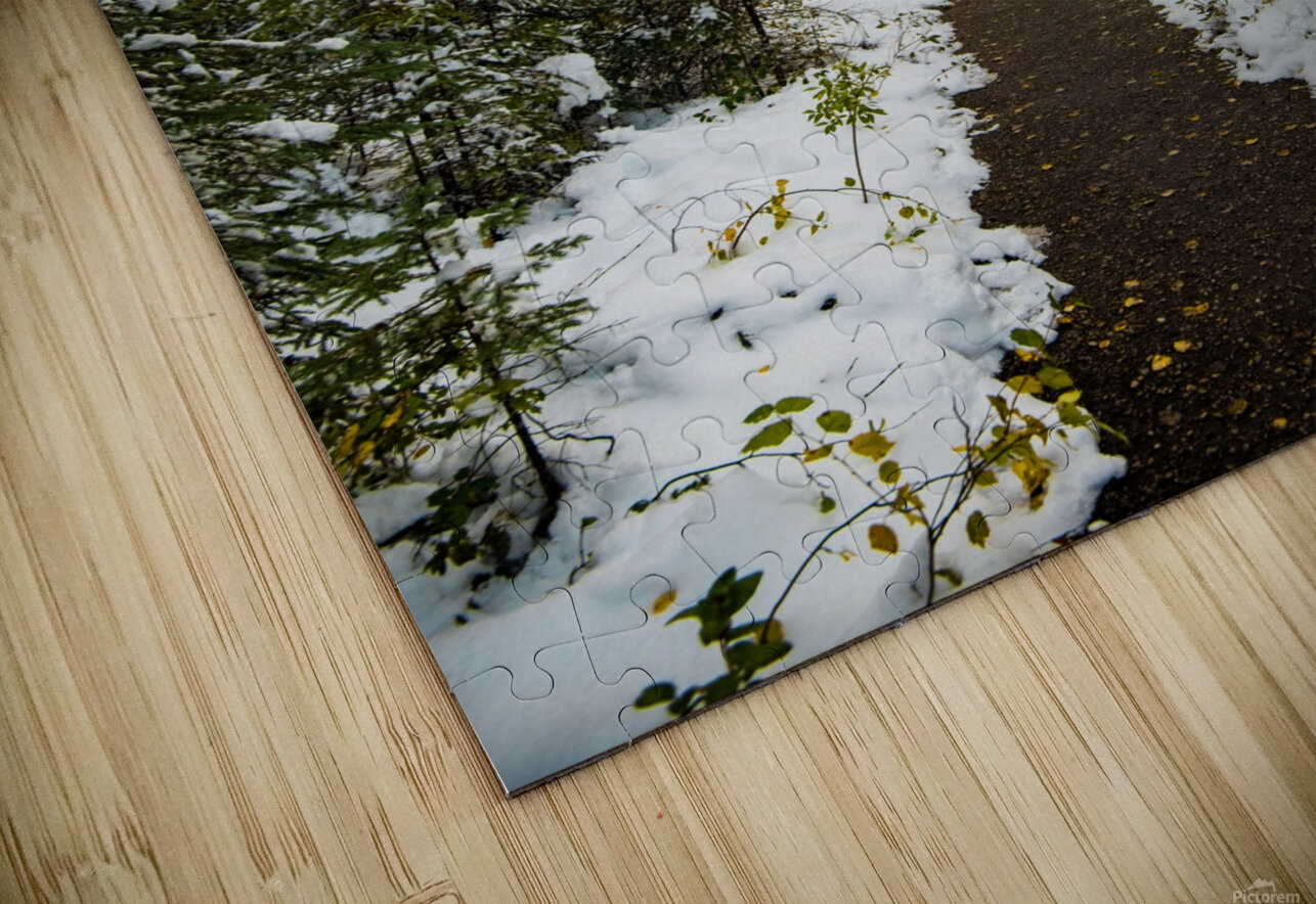 Winter Path HD Sublimation Metal print
