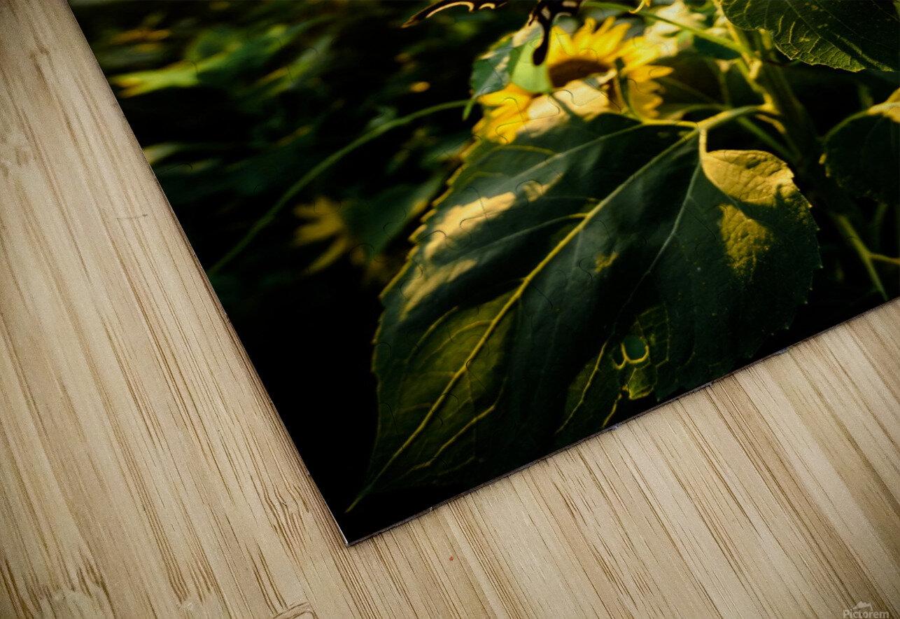Sunflower Love HD Sublimation Metal print