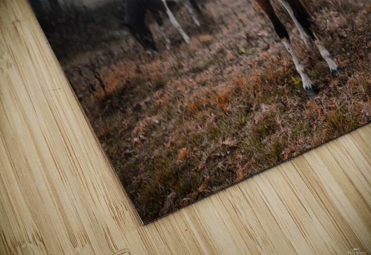 In the Wild HD Sublimation Metal print