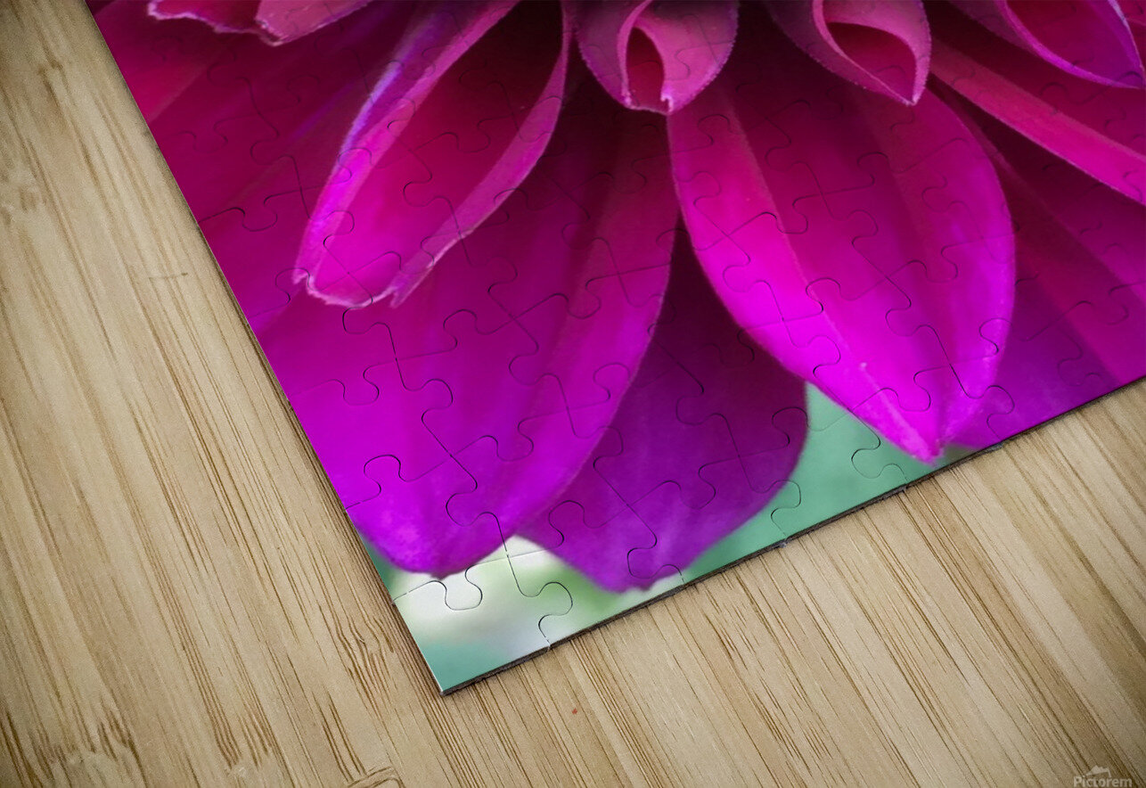Dahlia HD Sublimation Metal print