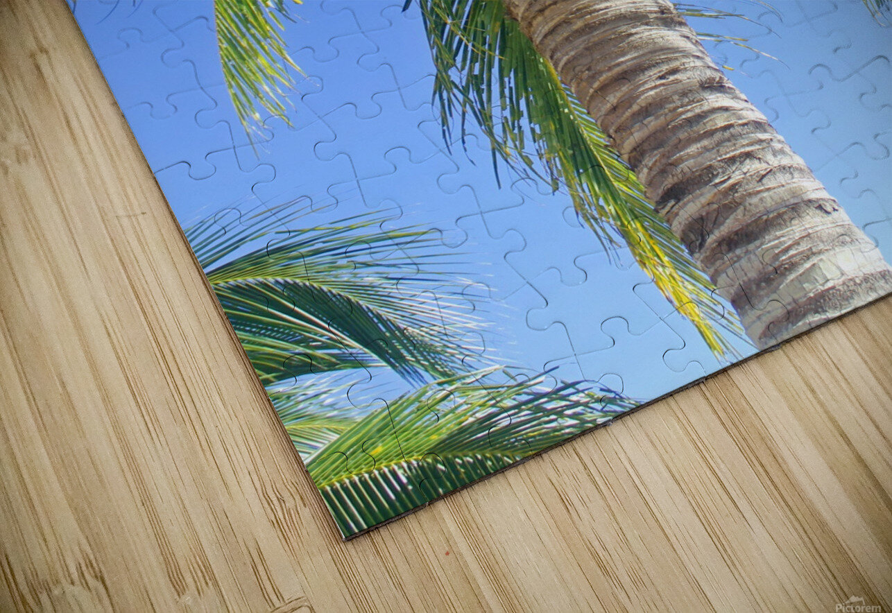 Palm Tree and Coconuts HD Sublimation Metal print
