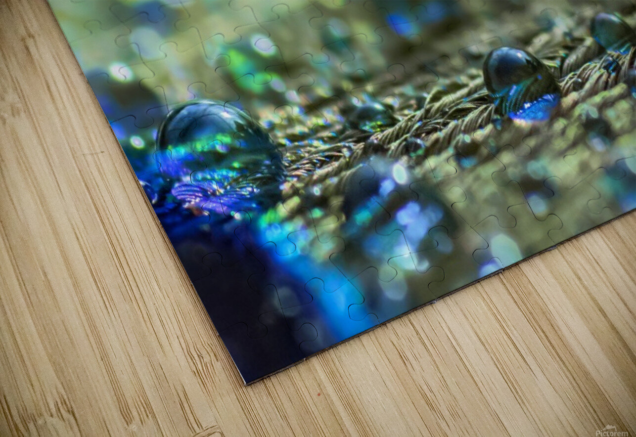Shimmering Peacock Feather HD Sublimation Metal print