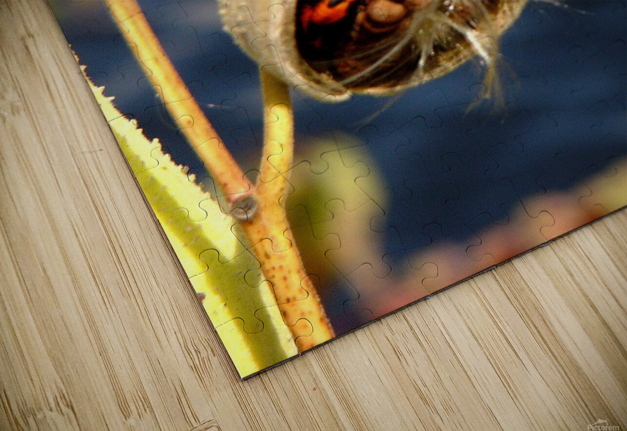Wild Thing HD Sublimation Metal print