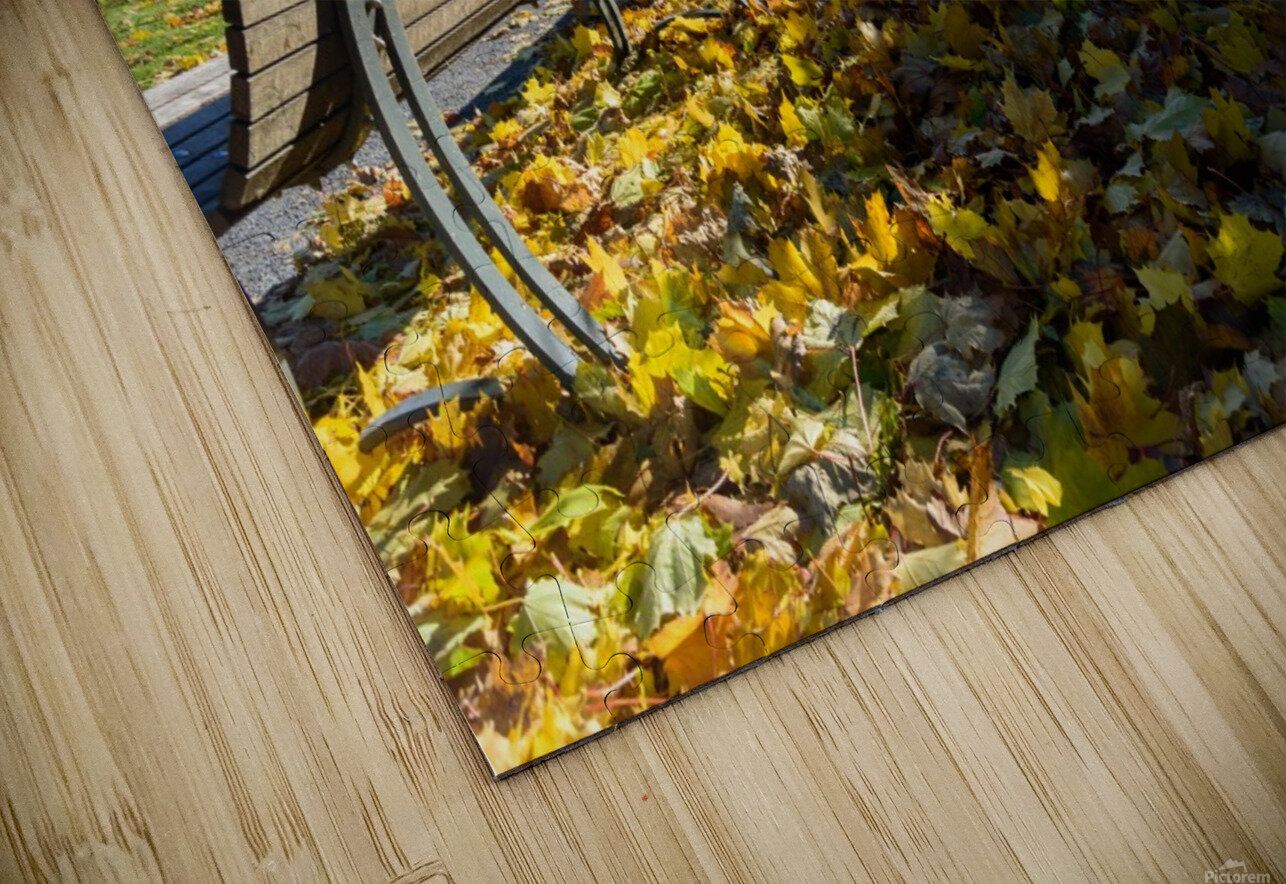 Autumn leaves in the park HD Sublimation Metal print