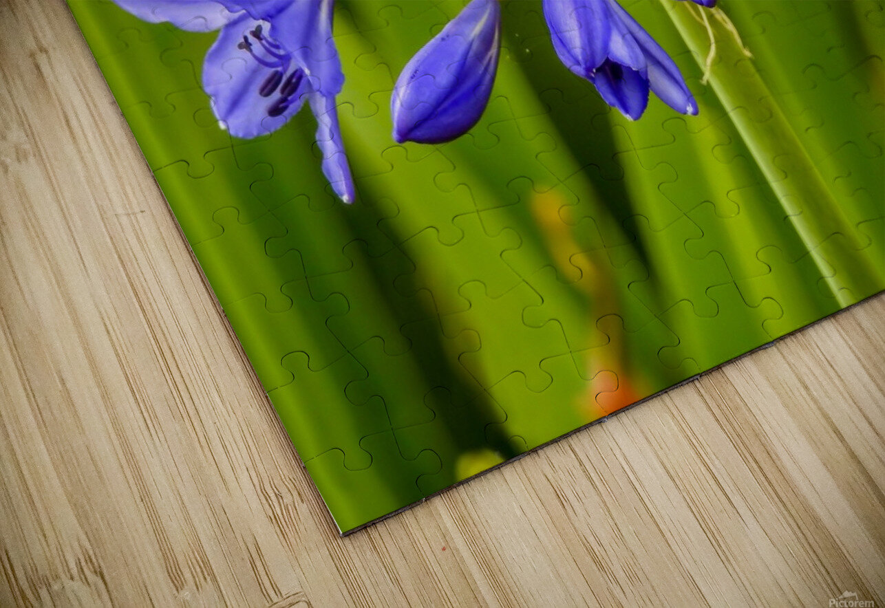 Close up of purple flowers HD Sublimation Metal print