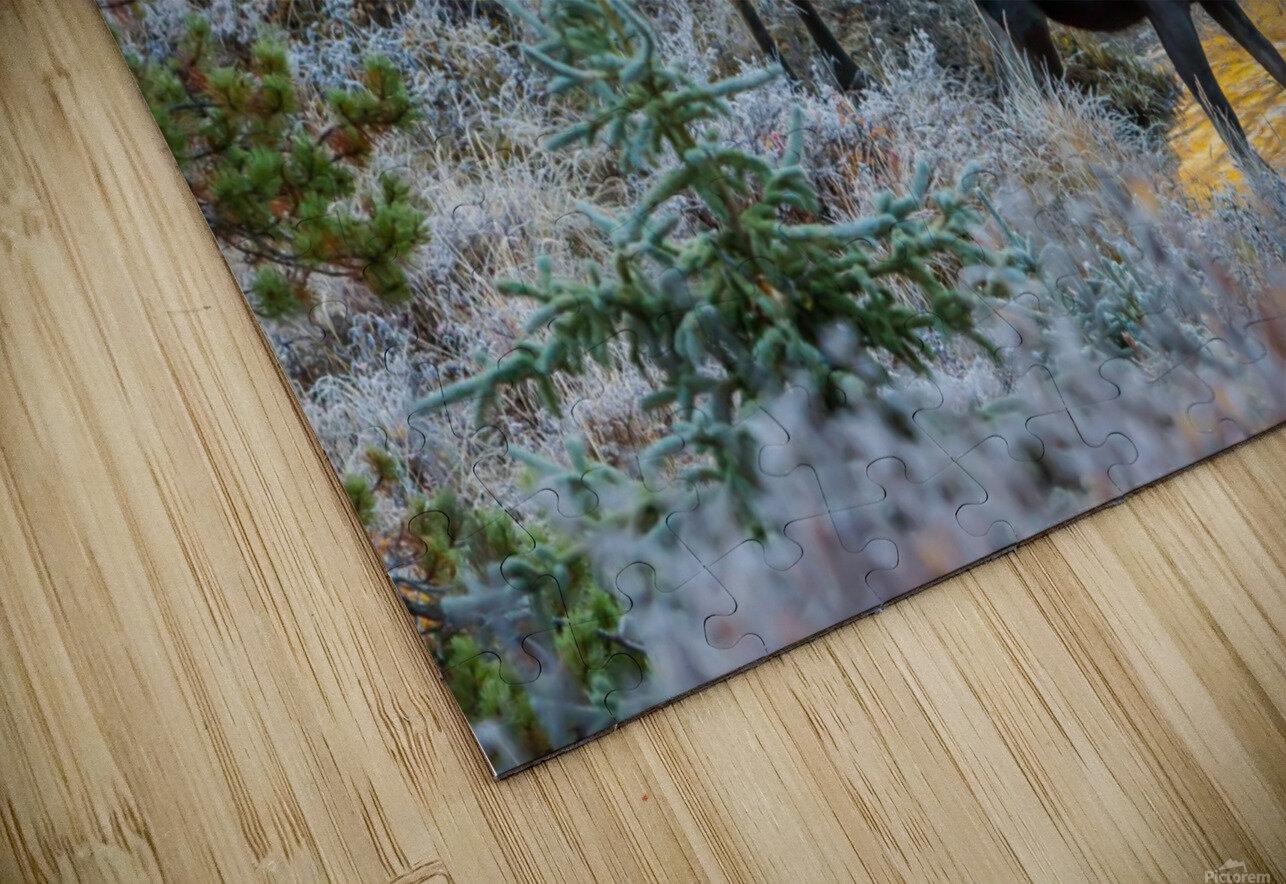 Moose On Golden Pond HD Sublimation Metal print