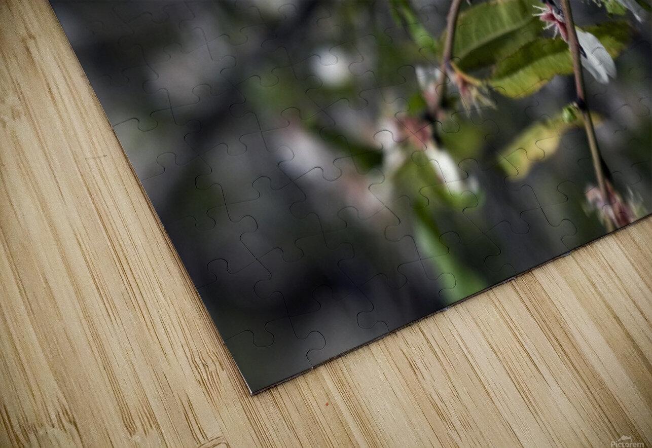 Flowering almonds 2 HD Sublimation Metal print
