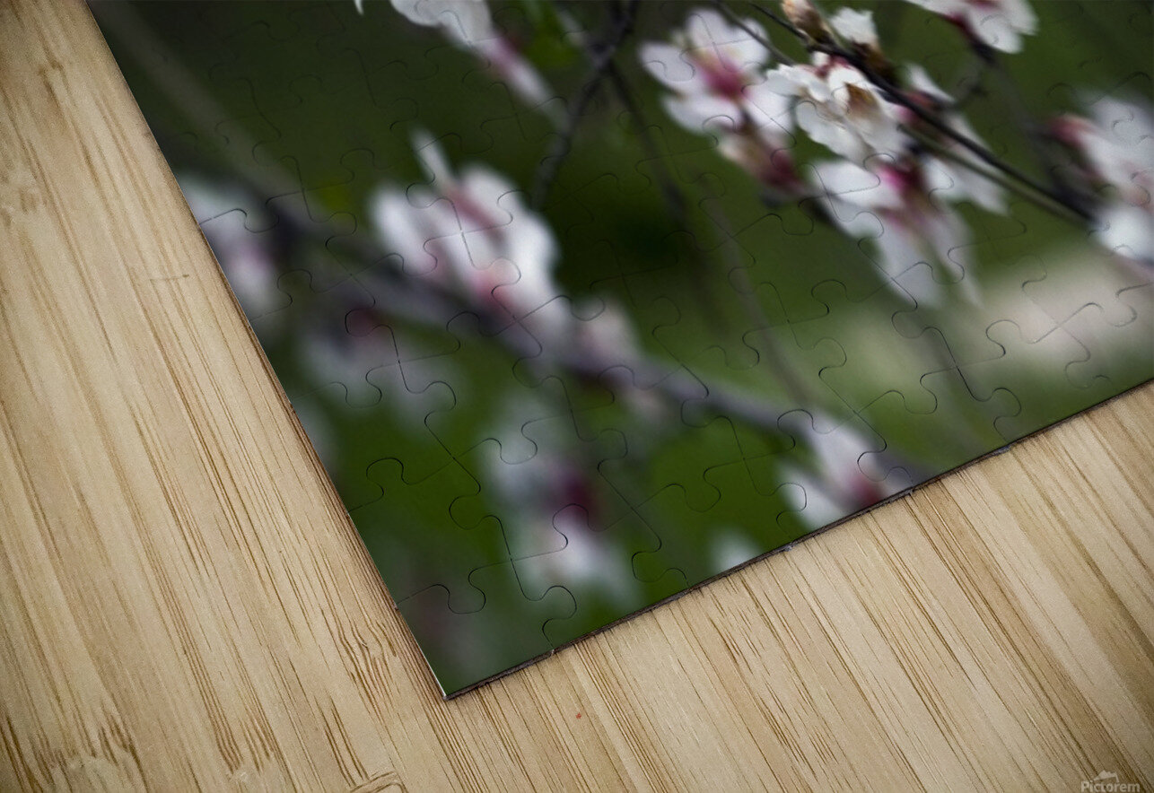 Flowering almonds 1 HD Sublimation Metal print