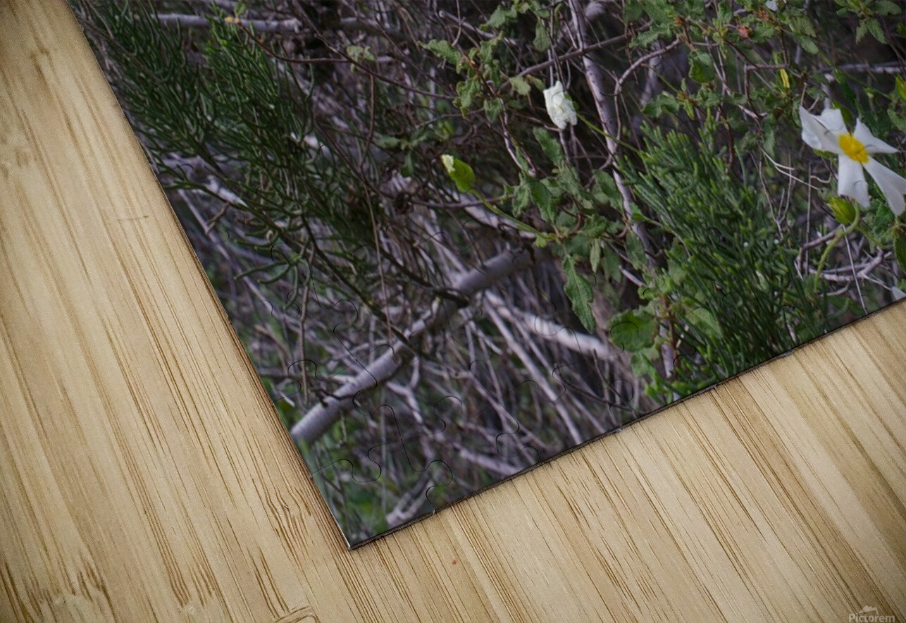 Forest flowers HD Sublimation Metal print