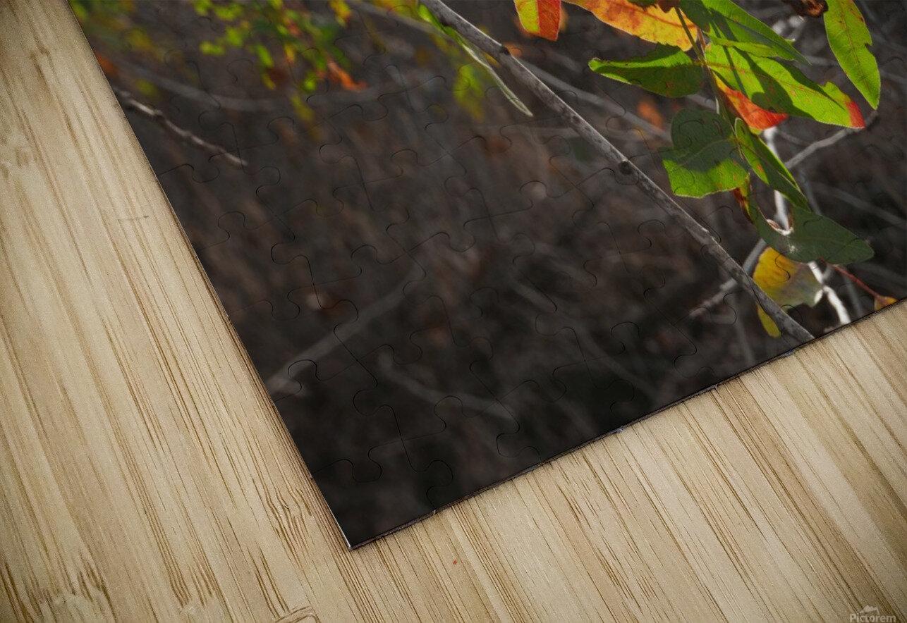 Autumn light HD Sublimation Metal print