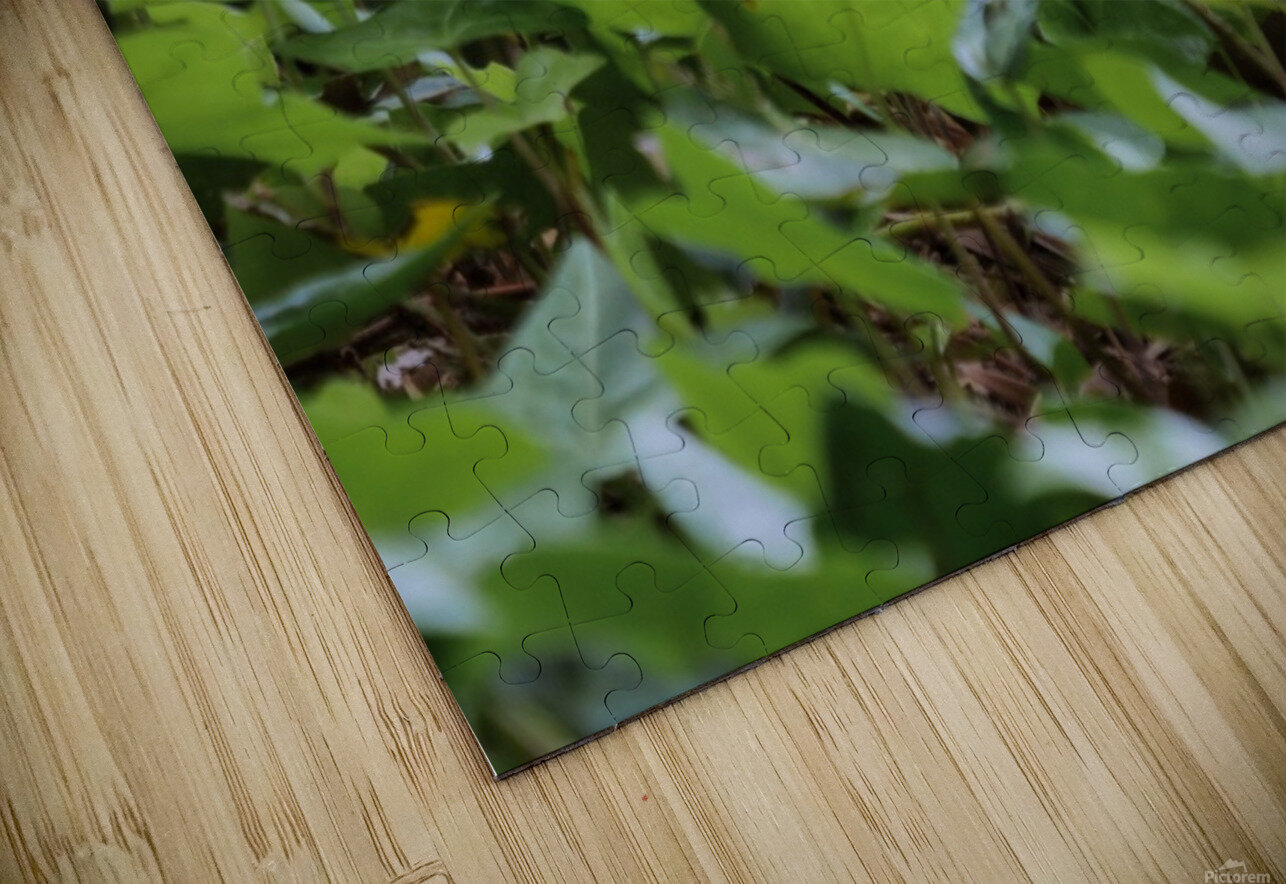 Duck In Plants HD Sublimation Metal print