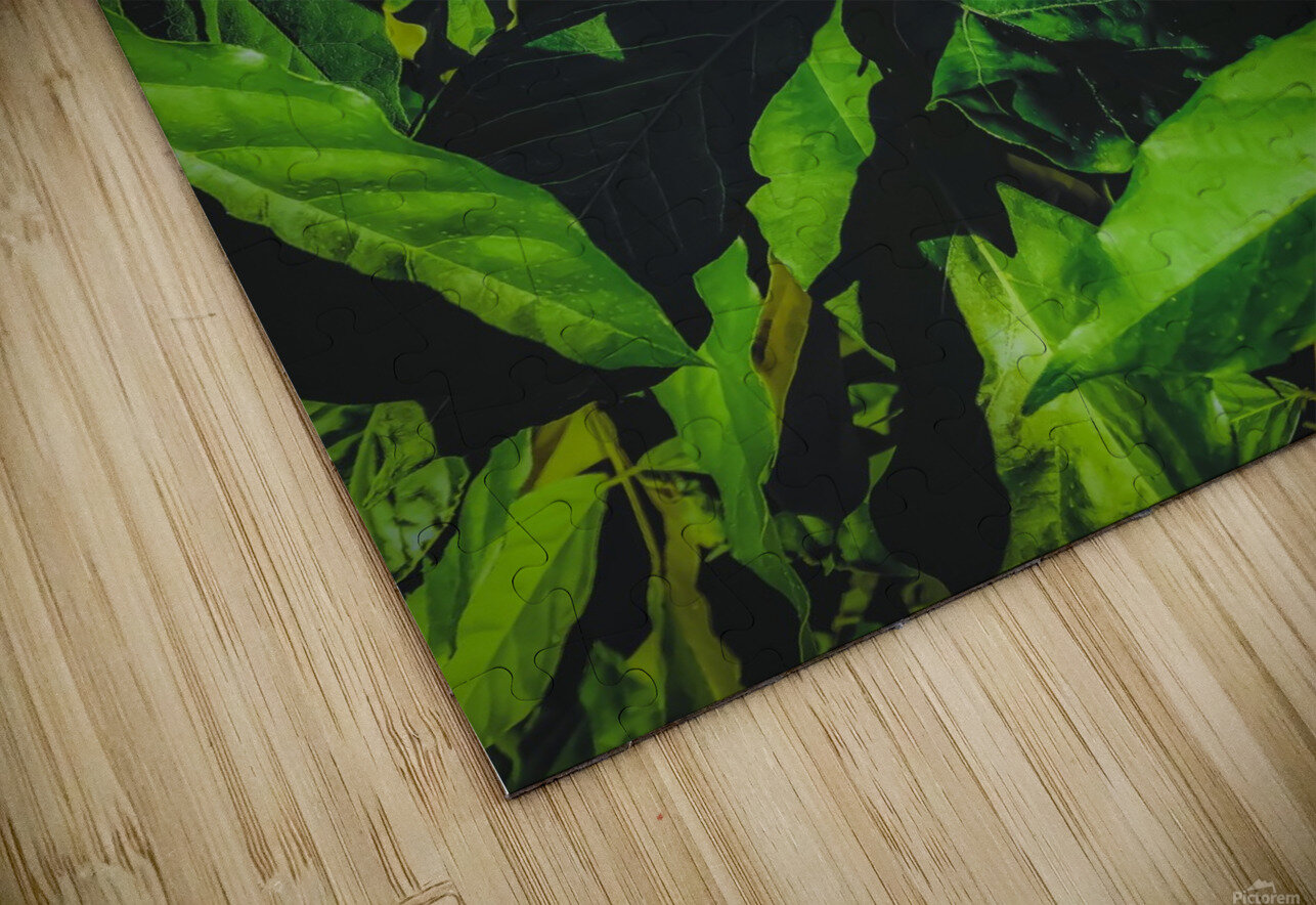 green leaves texture background HD Sublimation Metal print