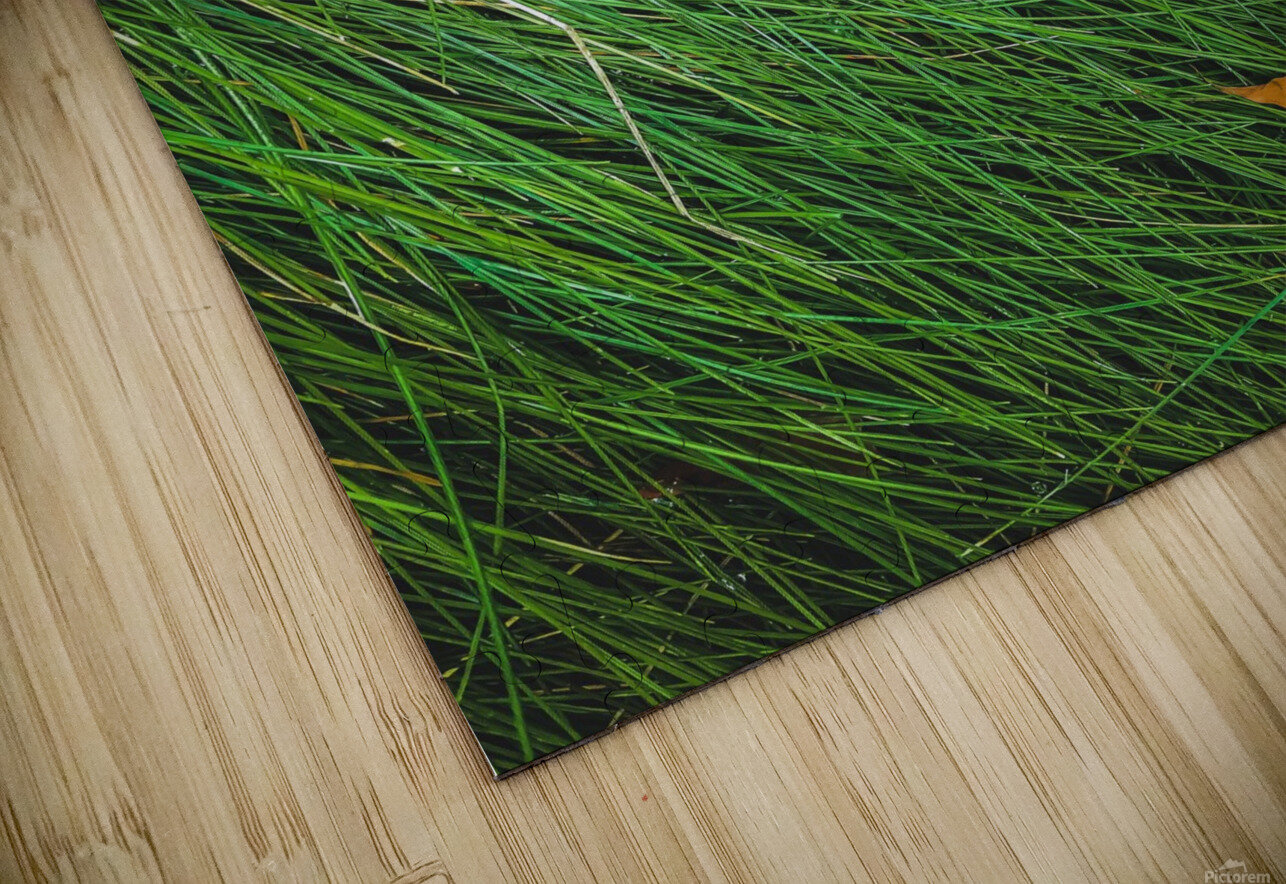 green grass field background with dry brown leaves HD Sublimation Metal print