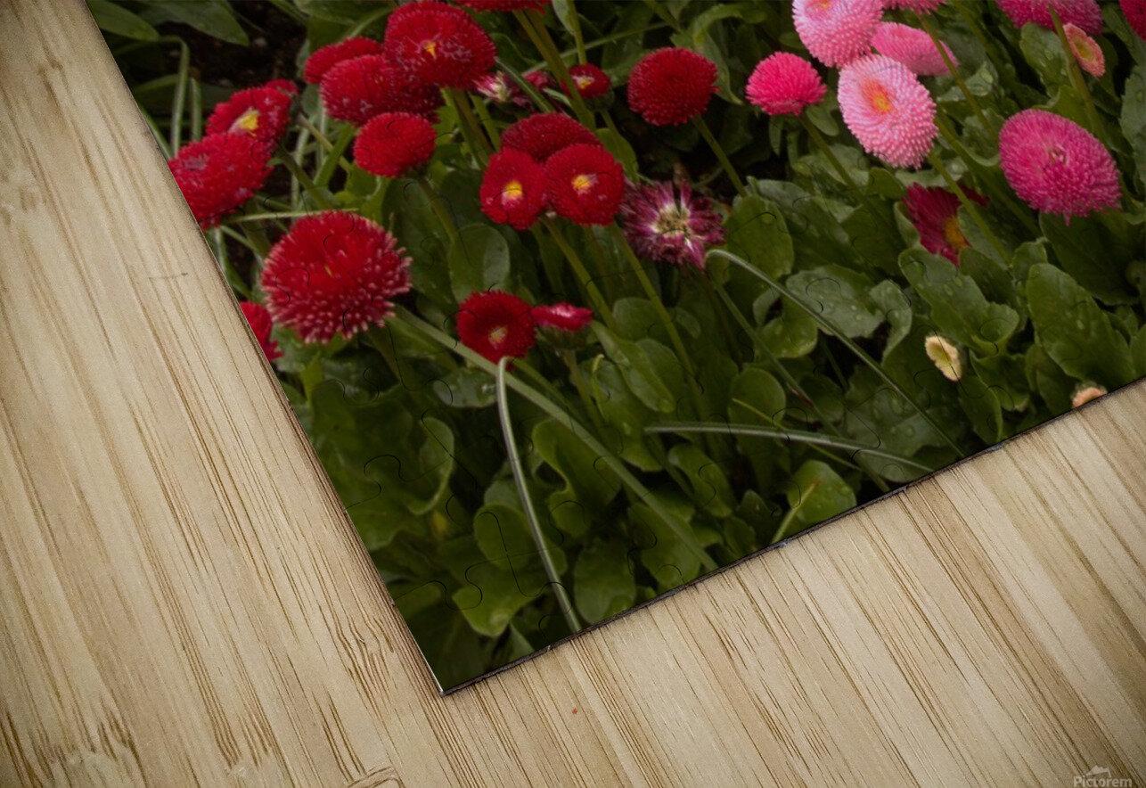 Spring Garden  HD Sublimation Metal print