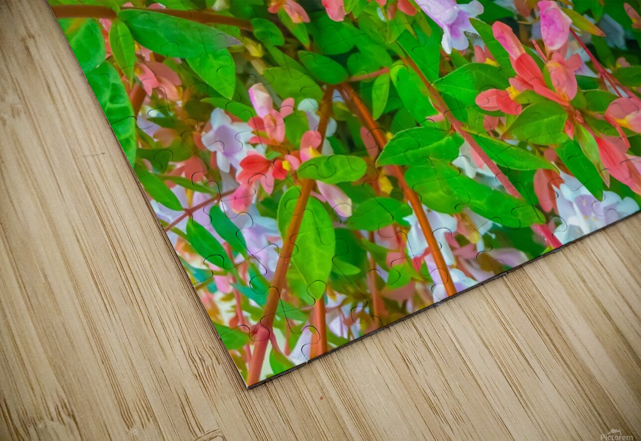 closeup blooming pink flowers with green leaves HD Sublimation Metal print