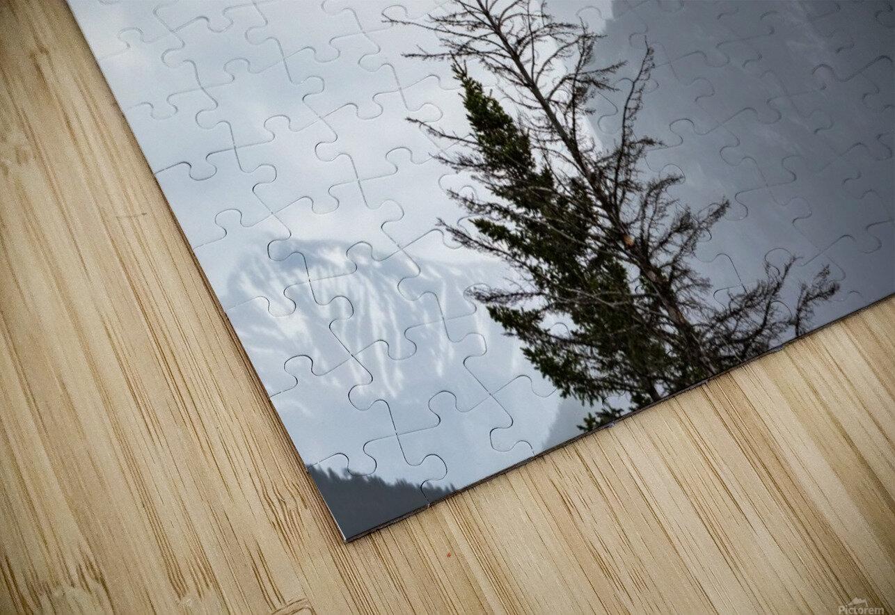 Bald Eagle In Banff National Park HD Sublimation Metal print