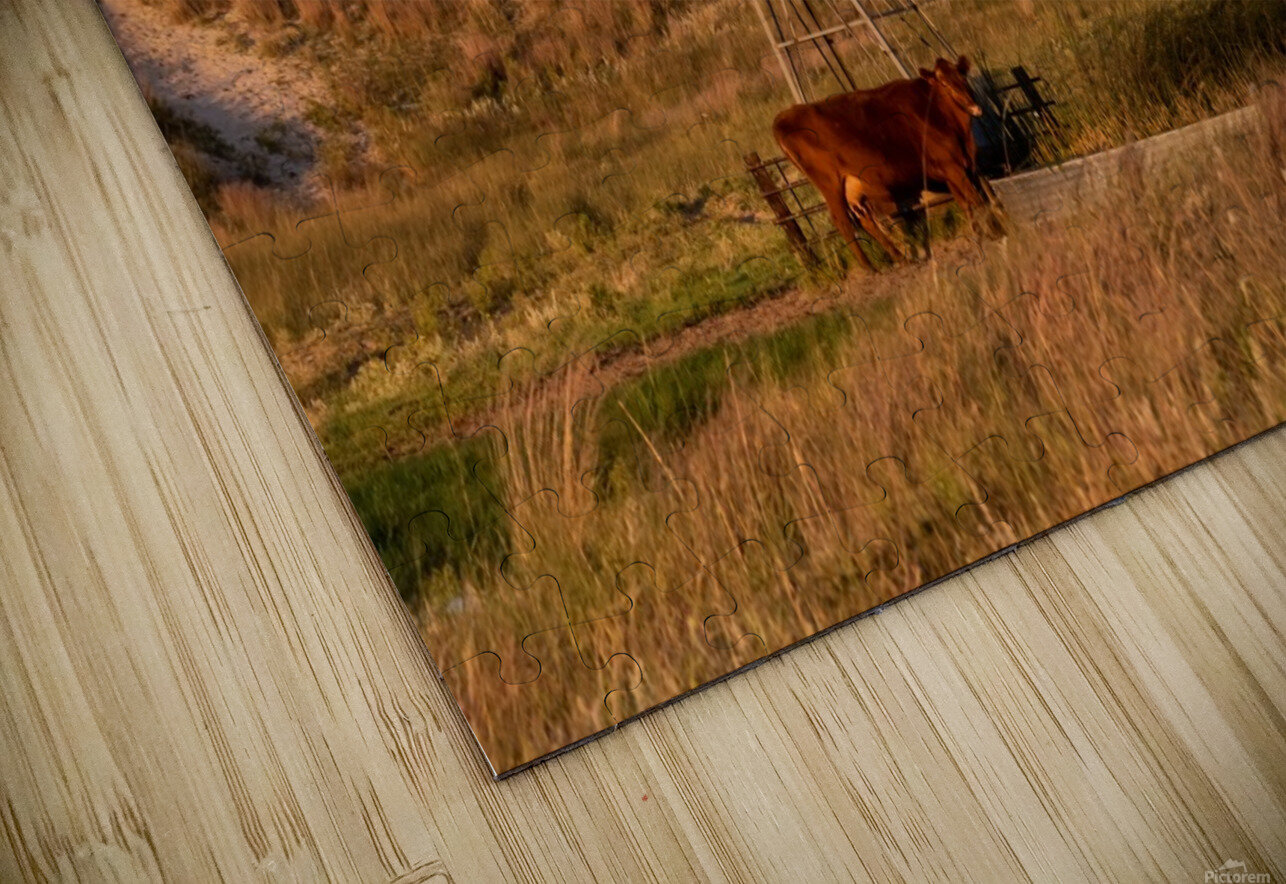 Late Afternoon Drink In The Sandhills HD Sublimation Metal print
