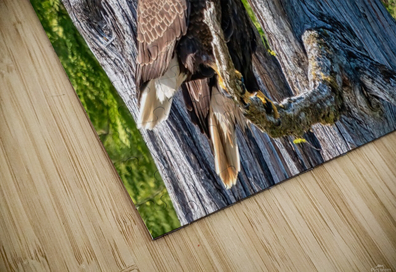 Eagle Tree HD Sublimation Metal print