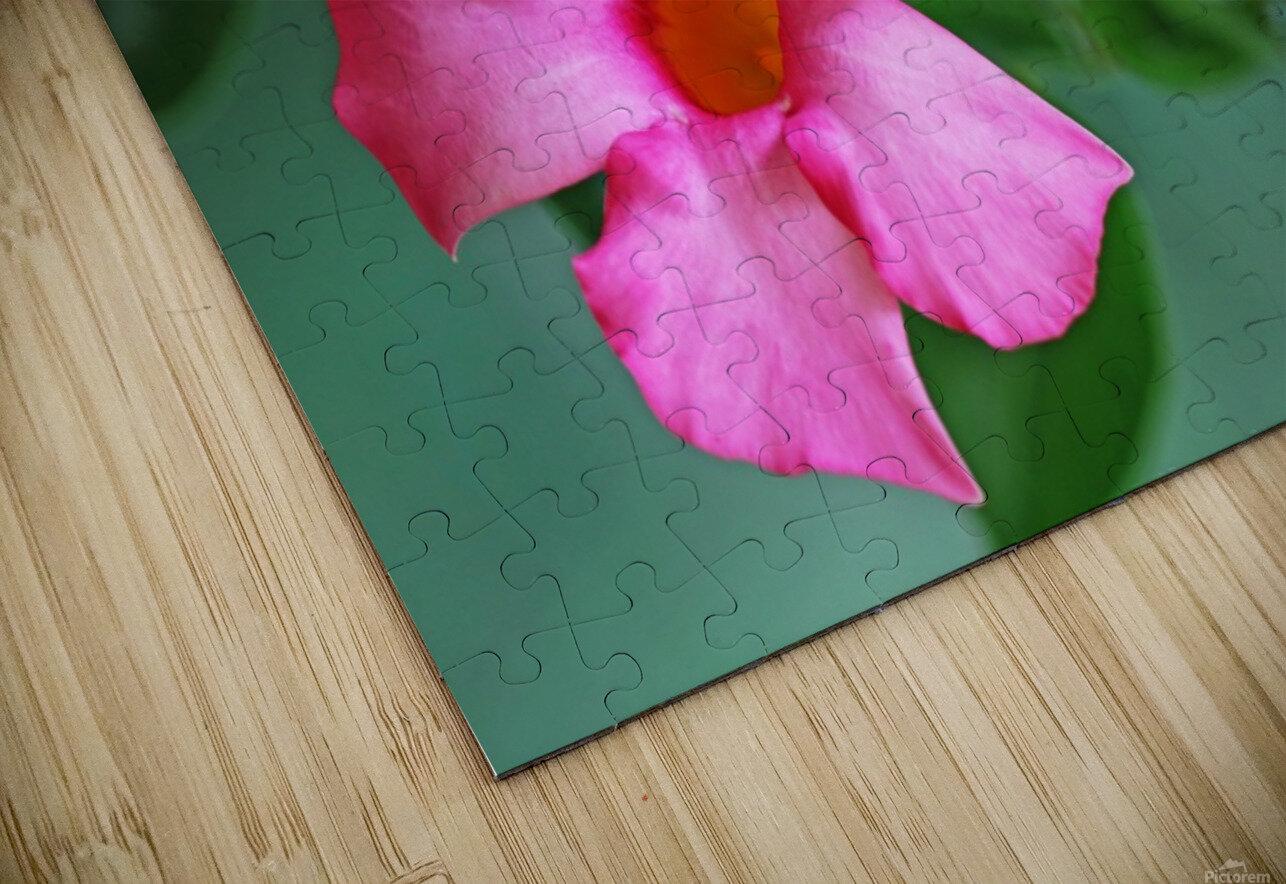 Mandevilla In Pink HD Sublimation Metal print