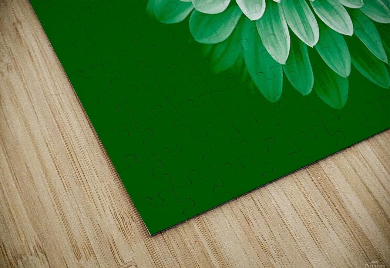 Dahlia on Green HD Sublimation Metal print