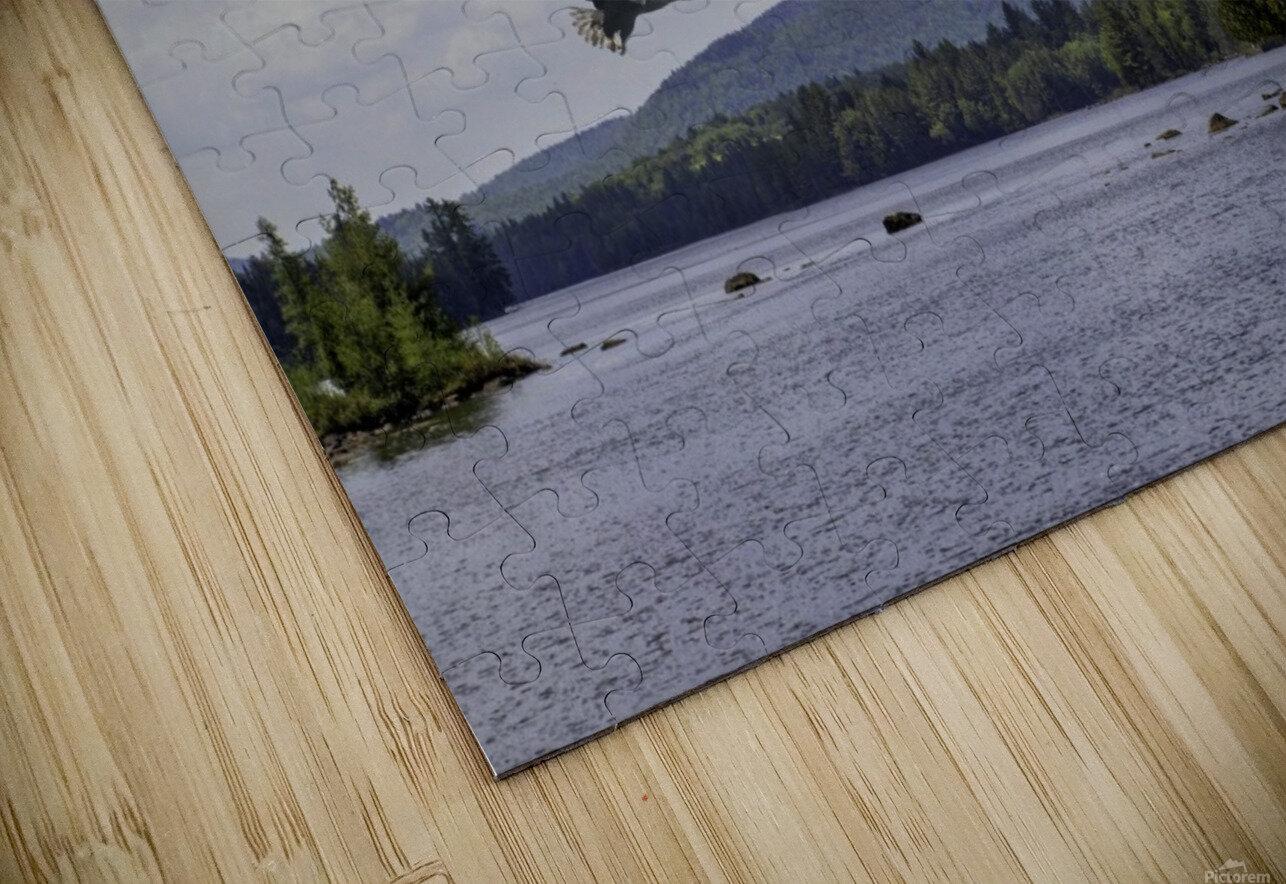 Eagle on Lake HD Sublimation Metal print