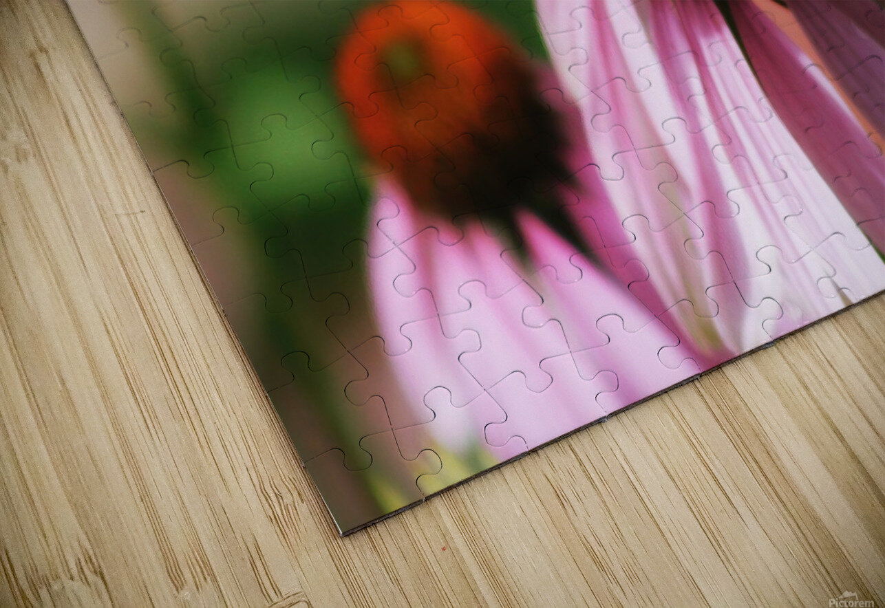 Closeup Butterfly on Cone Flower HD Sublimation Metal print