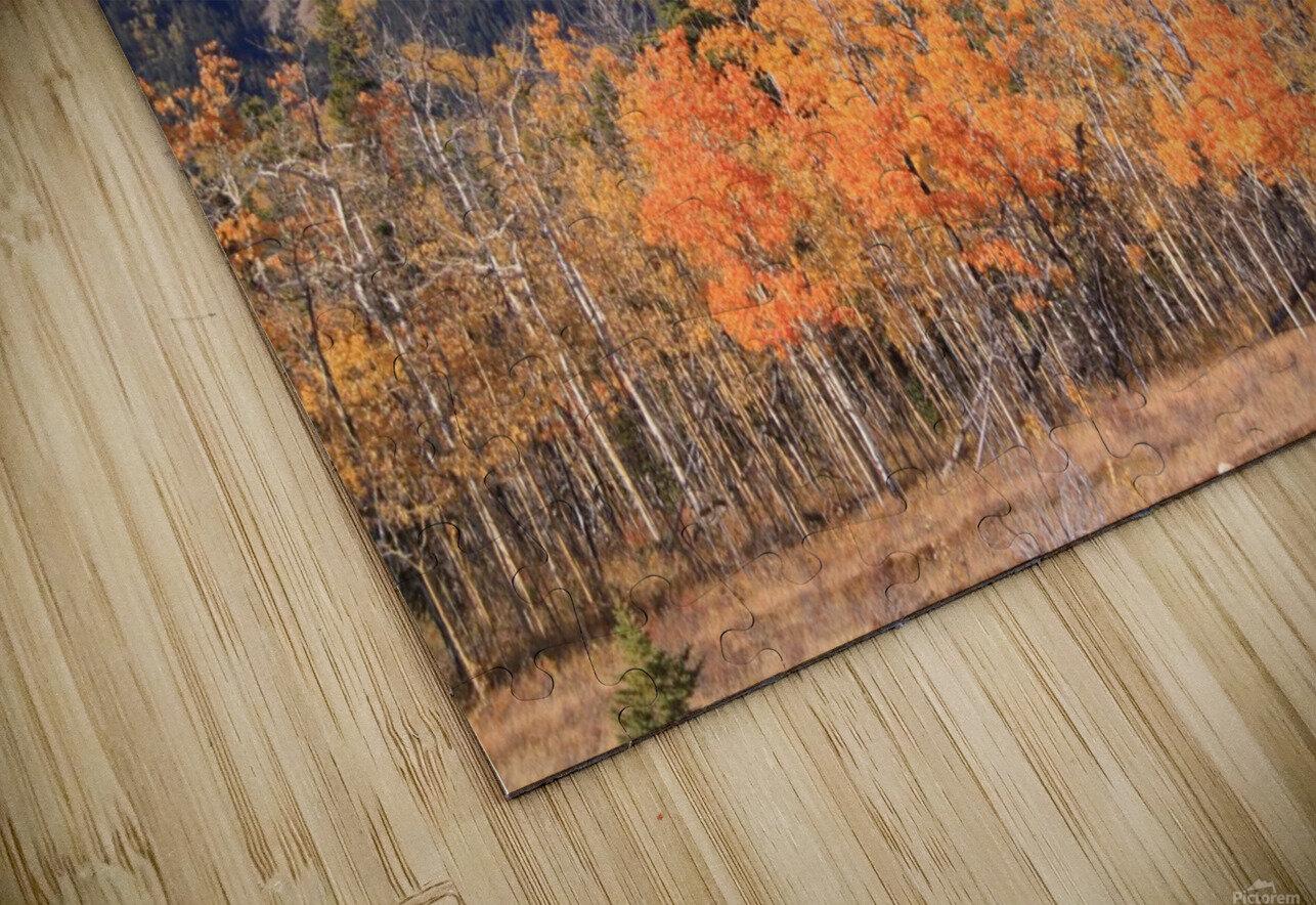 Yamnuska In Fall IMG_3238_1  HD Sublimation Metal print