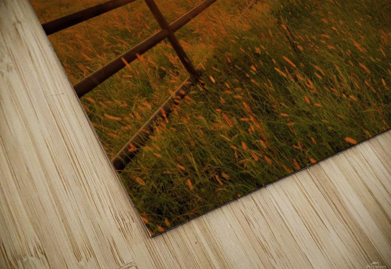 Cattle Pens Morning Sunburst HD Sublimation Metal print