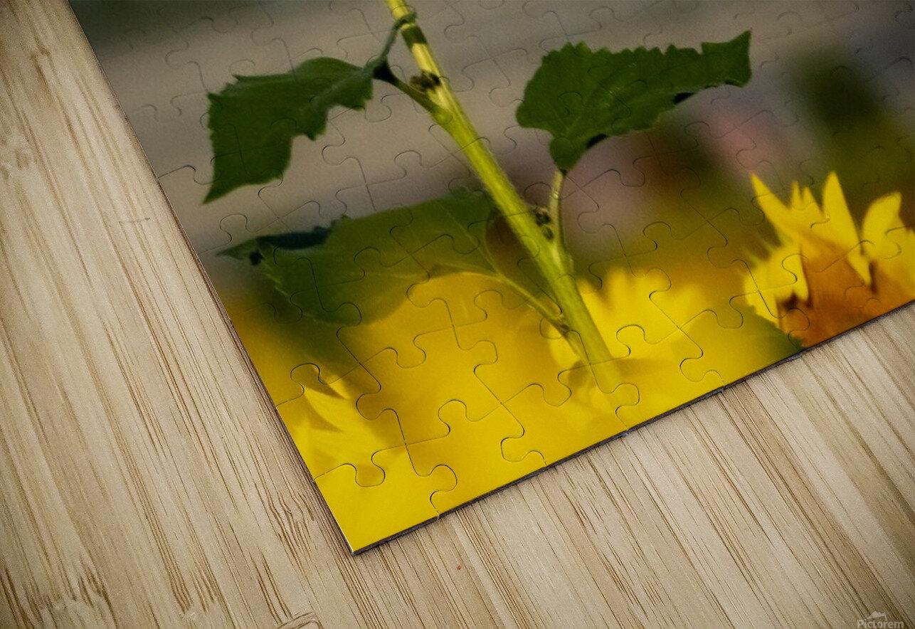 Sunflower Perch HD Sublimation Metal print