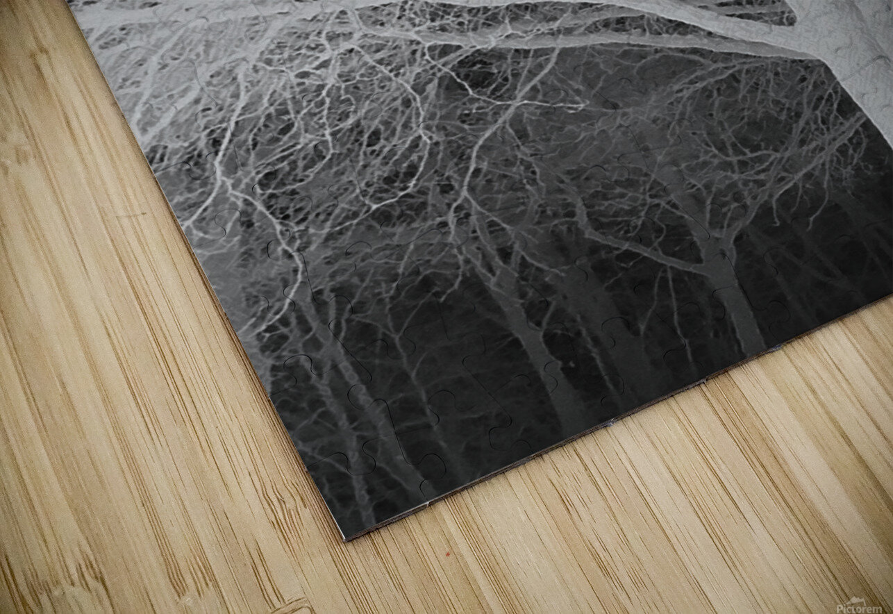 Ghost Trees HD Sublimation Metal print