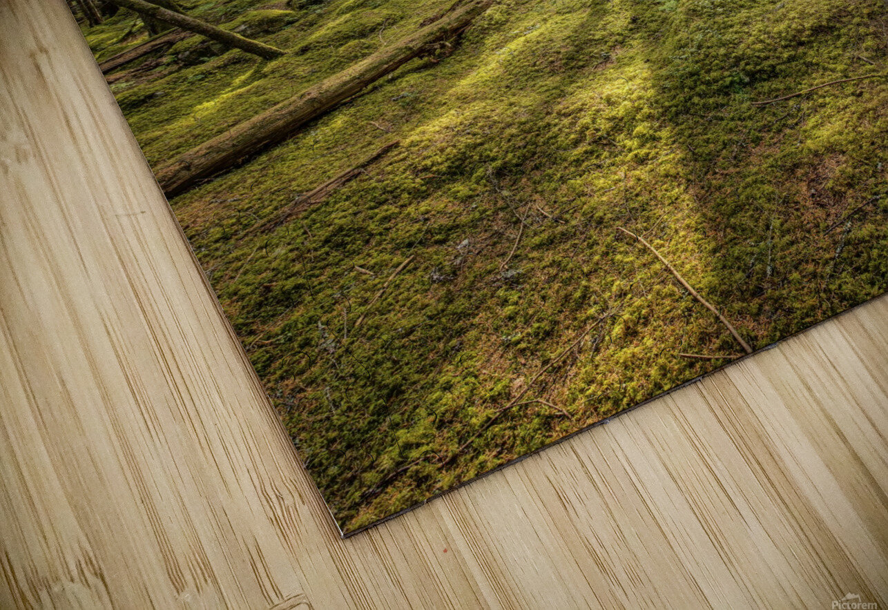 Mossy Forest Morning HD Sublimation Metal print
