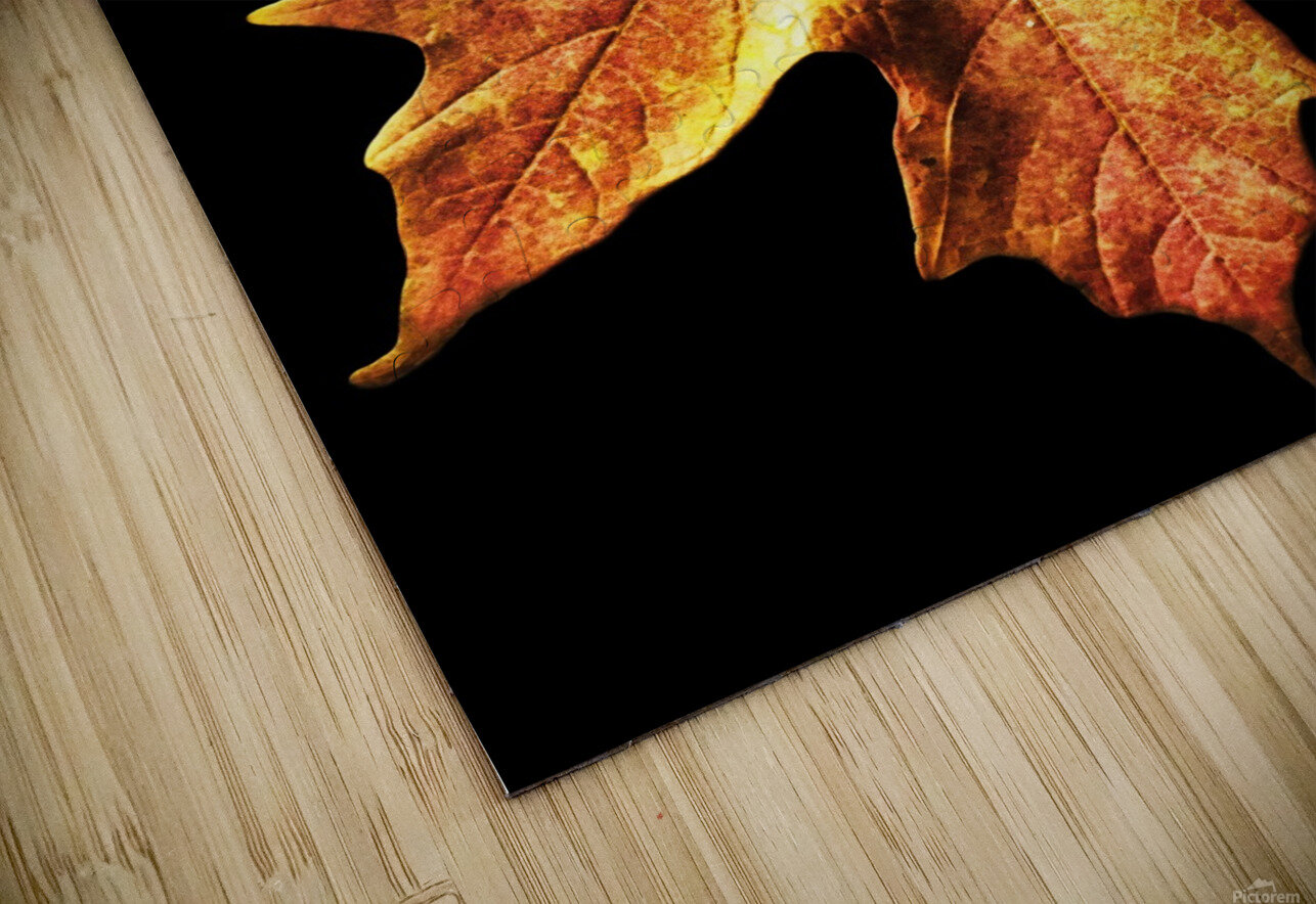 Fall Maple Leaves 1 HD Sublimation Metal print