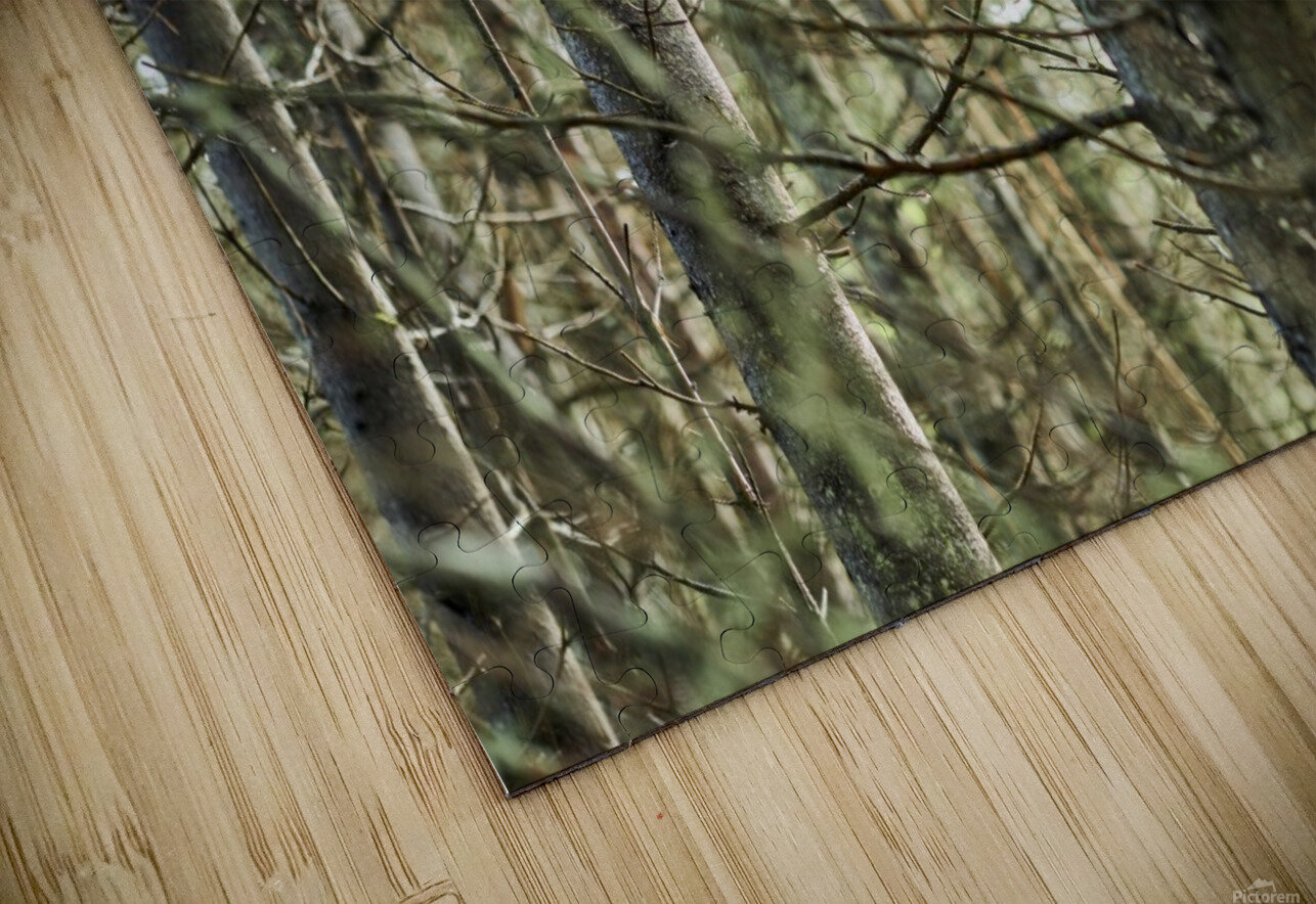 Trees in forest Mauricie National Park Quebec Canada HD Sublimation Metal print