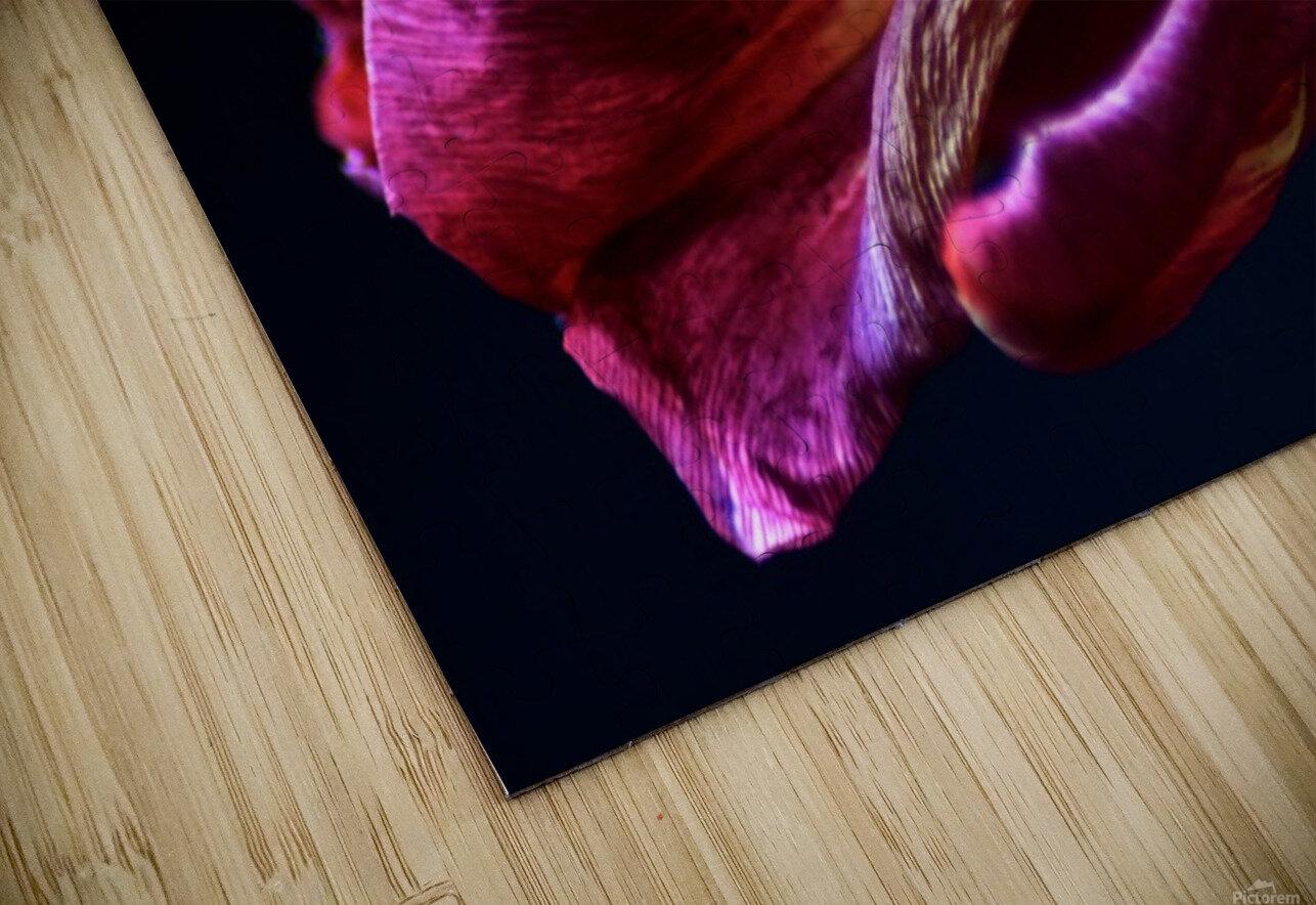 Tulip 3 HD Sublimation Metal print