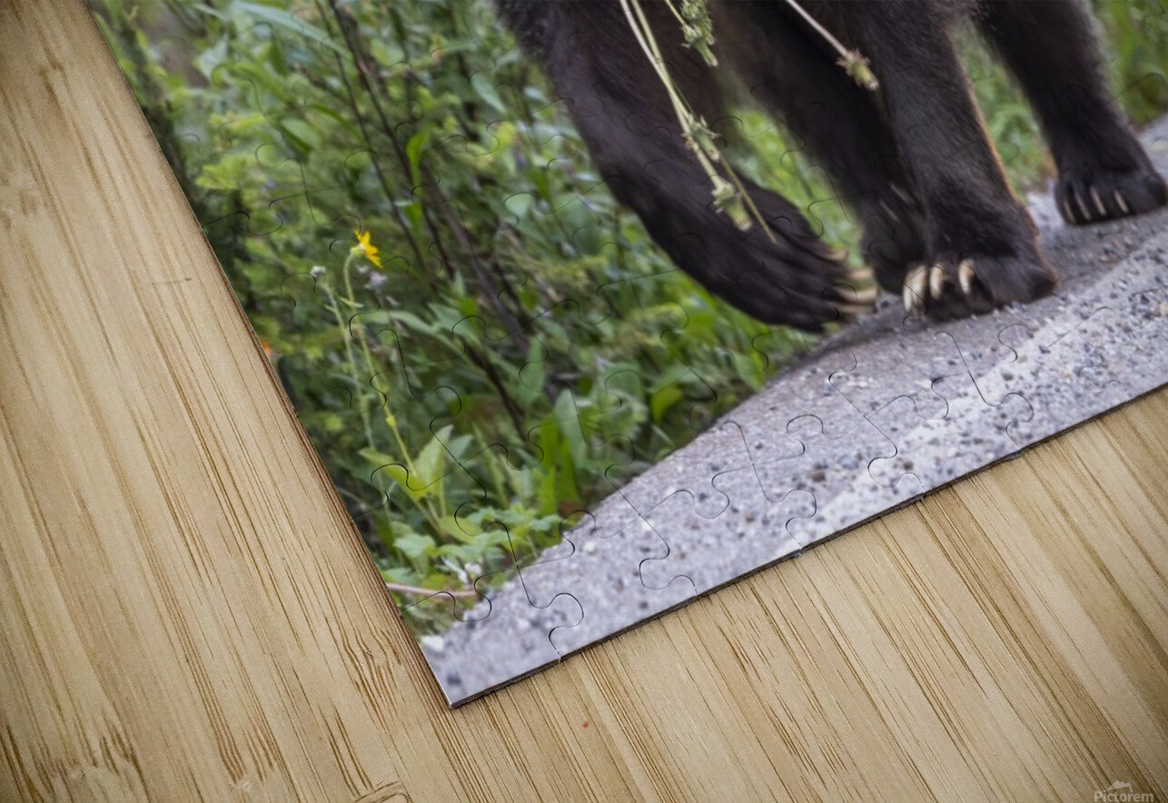 Grizzly Bear - Mouth Full HD Sublimation Metal print