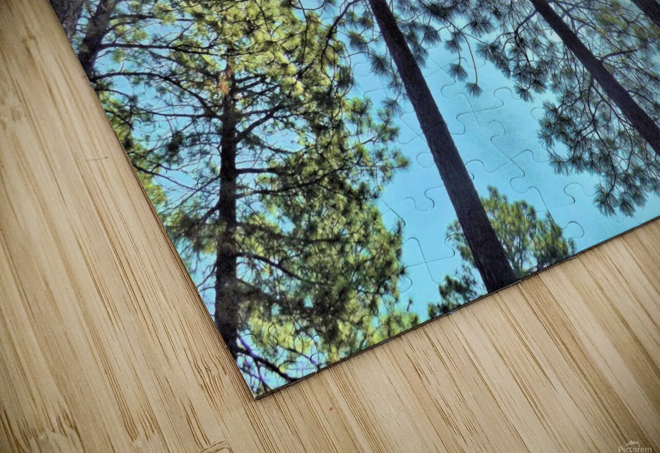 Tree Tops HD Sublimation Metal print