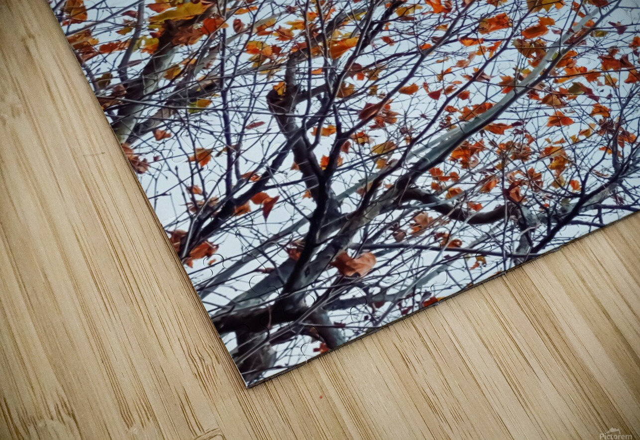 Tree branch with orange autumn leaves and blue cloudy sky HD Sublimation Metal print