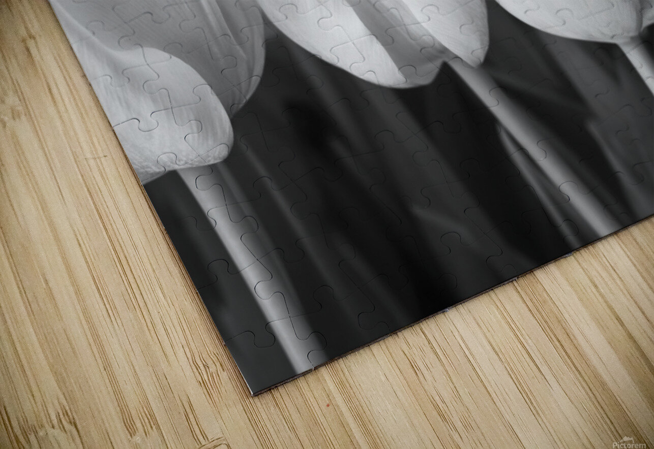 Bunch of Tulips close-up HD Sublimation Metal print