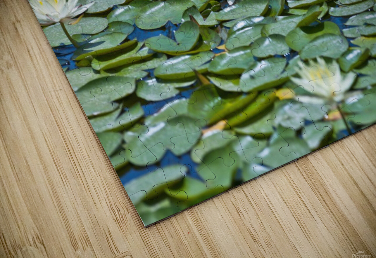 Water Lilies HD Sublimation Metal print
