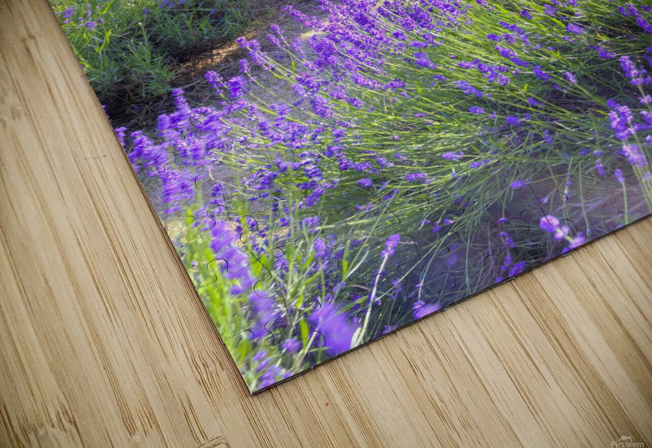 Bench in Lavender field HD Sublimation Metal print