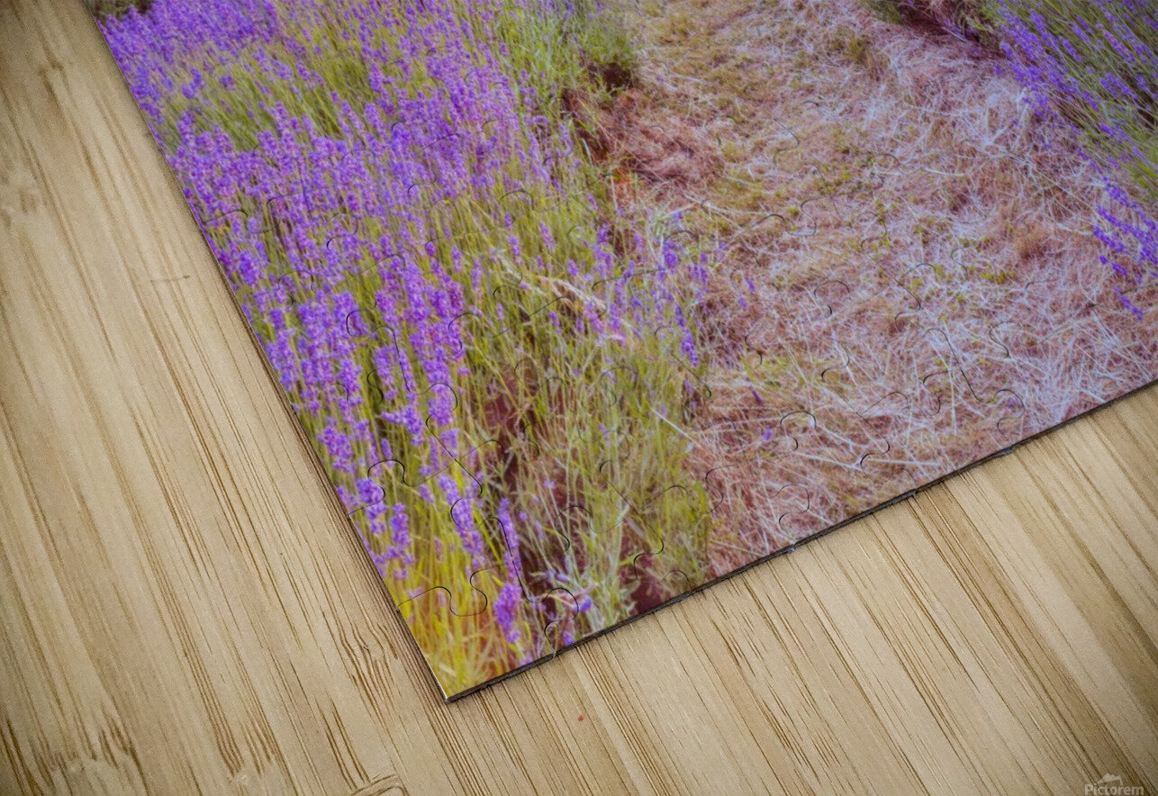 Lavender field at sunset HD Sublimation Metal print