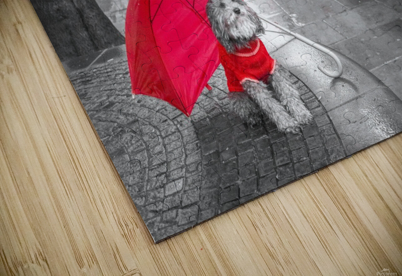 Dog with umbrella on London city street HD Sublimation Metal print