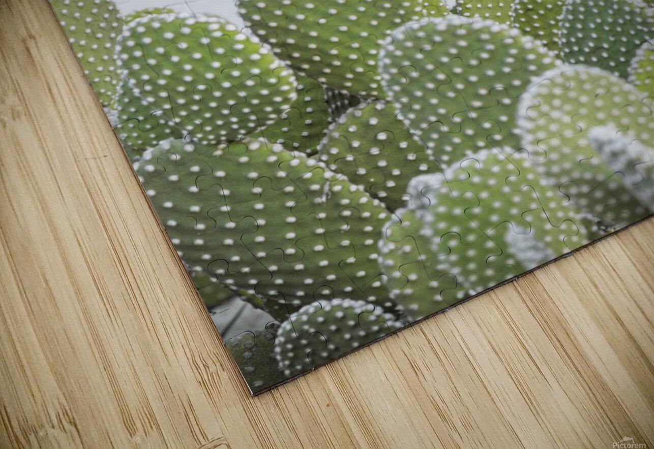 Cactus plant HD Sublimation Metal print