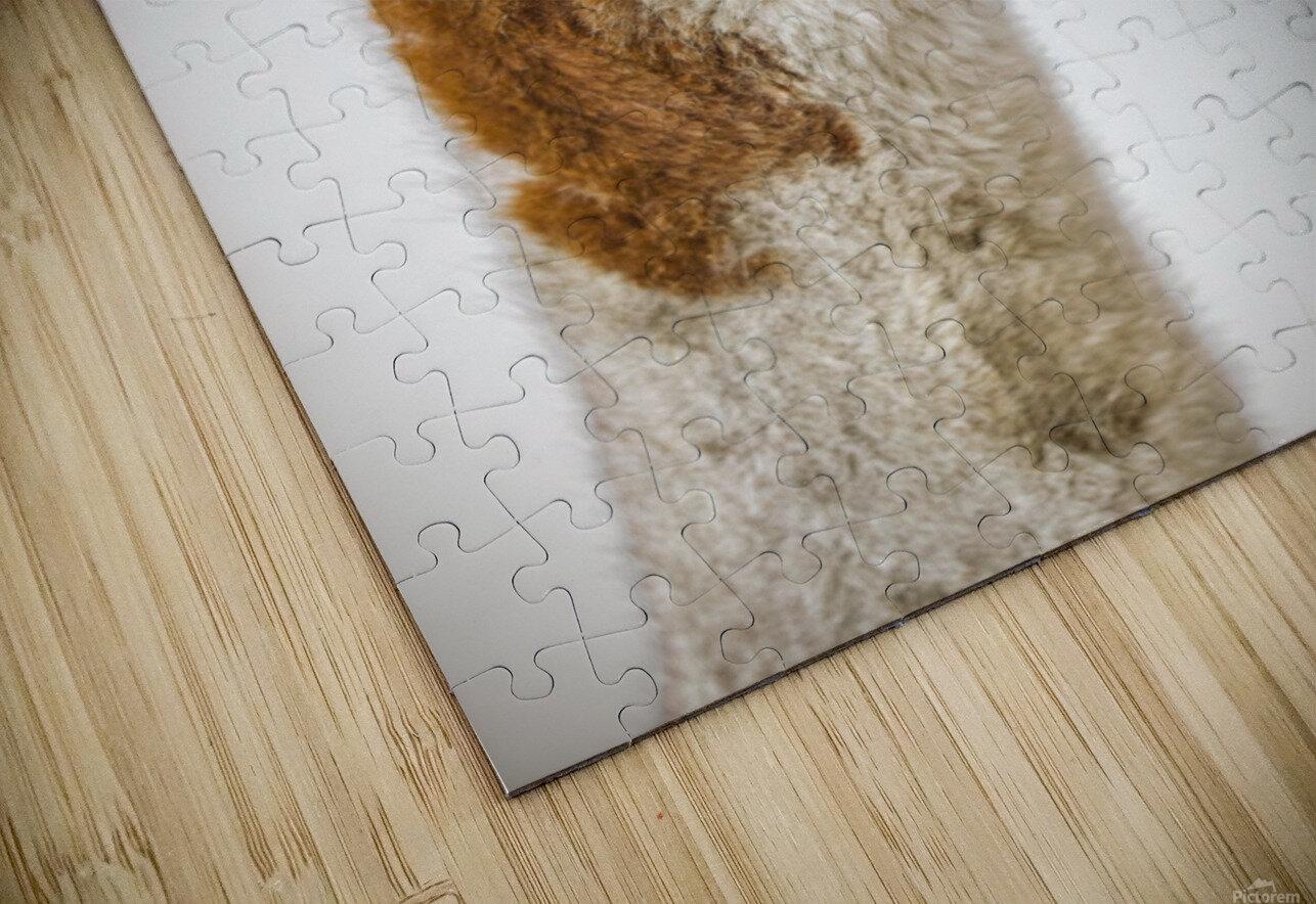 Close-up of Alpaca HD Sublimation Metal print