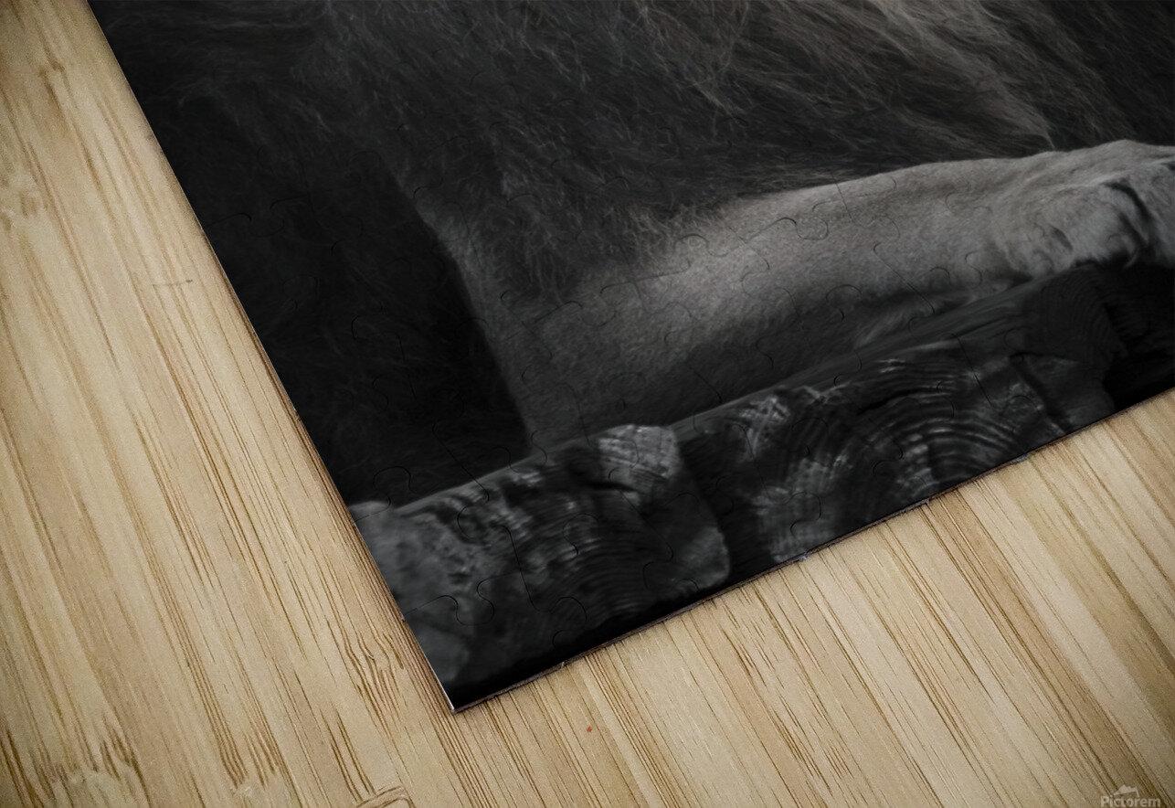 Lion HD Sublimation Metal print