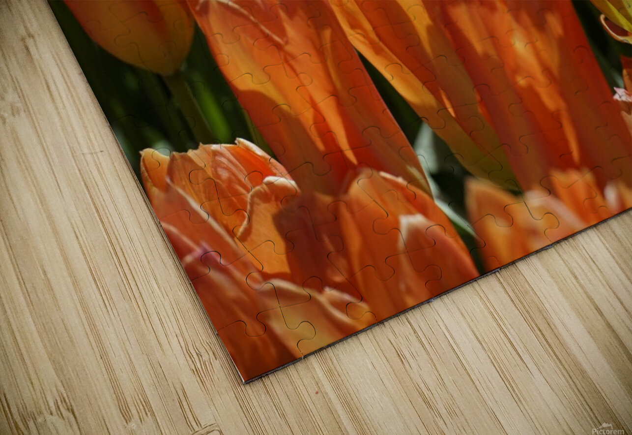 Spring Blooms of Holland 4 of 8 HD Sublimation Metal print